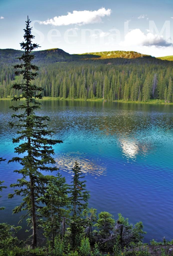 Aspen pine trees at the glacial Lake Irwin in Colorado.